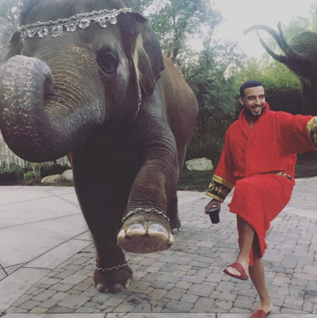 french-montana-pet-elephant